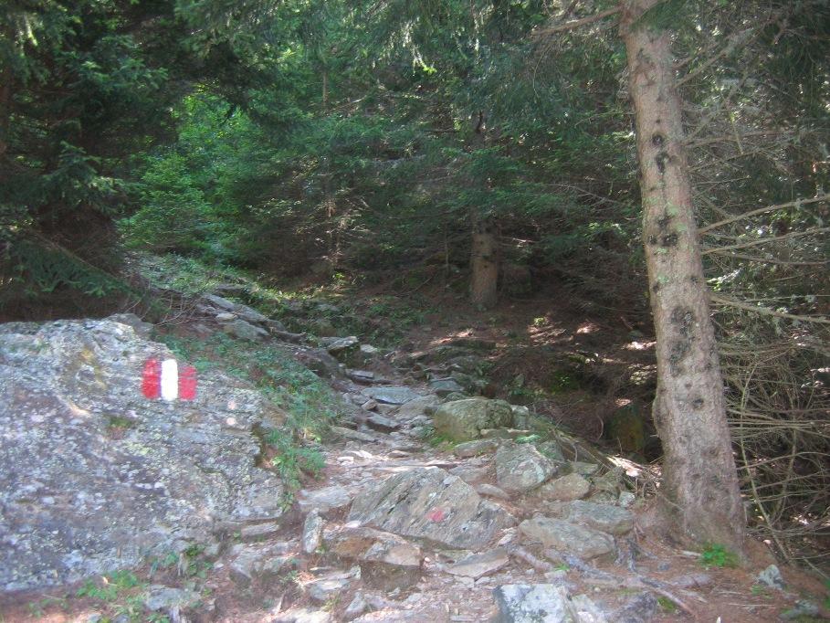 Si incontrano nel bosco e si lasciano andare in un amplesso - 3 part 5